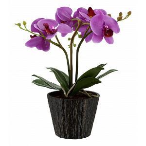 Растения в горшке FlowerPower 28003 Globo